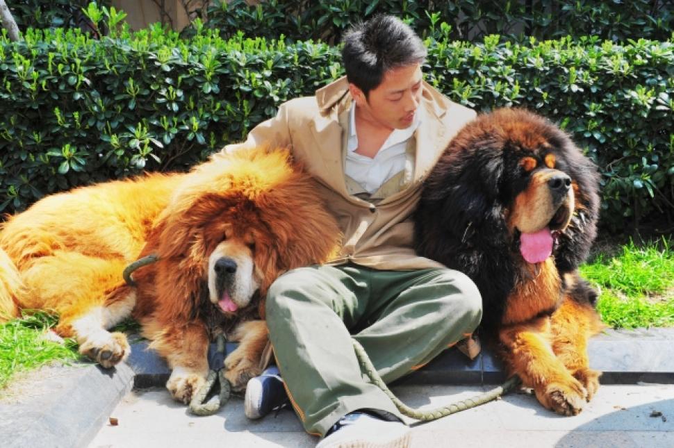 $2 millions dog